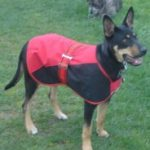 Dog Coats, Collars & Leads