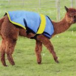 Alpaca Equipment